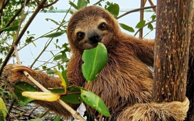Sloth at Meet a Sloth – Diversity of Living Things Show